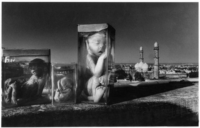 Doce fotografías en blanco y negro que no terminan de contar su historia.