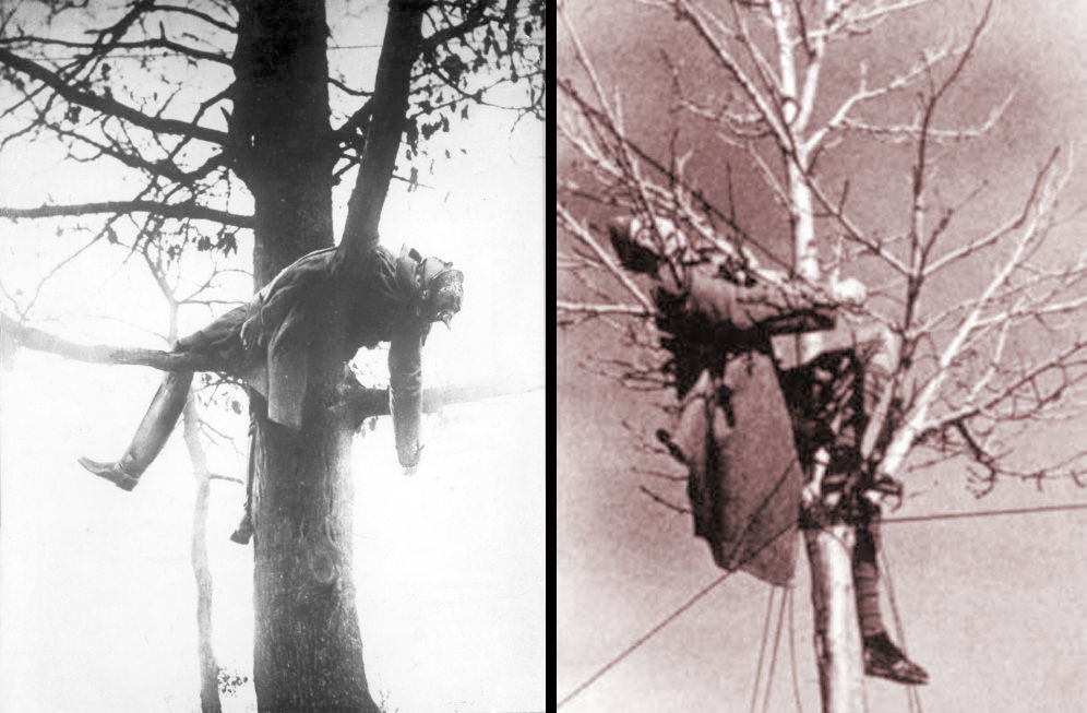 El hombre es el único animal que tropieza dos veces con la misma fotografía Arbol